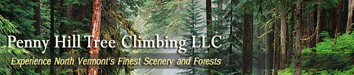 Twin Pines LLC vermont tree climbing